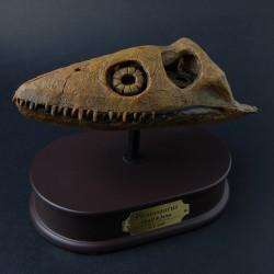 Plesiosaurus schedel
