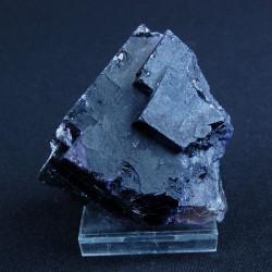 violet-fluoriet